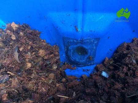 Pantagruel-BSF-compost-bin-05.JPG