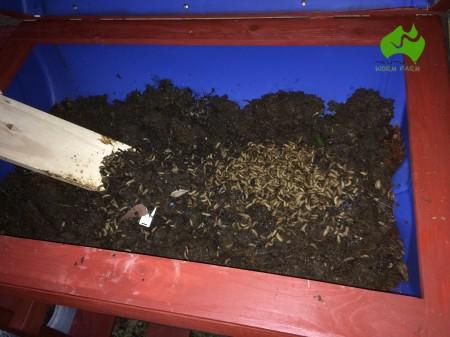 Pantagruel-BSF-compost-bin-07.JPG